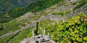 Plozza Vini