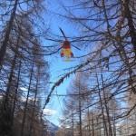 elicottero elisoccorso meriggio